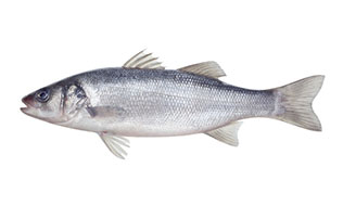 The Big 8 Food Allergen: Fish